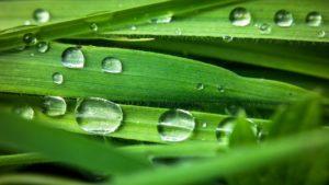 Wassertropfen auf Bambusfasern